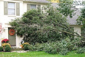 Assessing Trees on Your Grass Valley Rental Property
